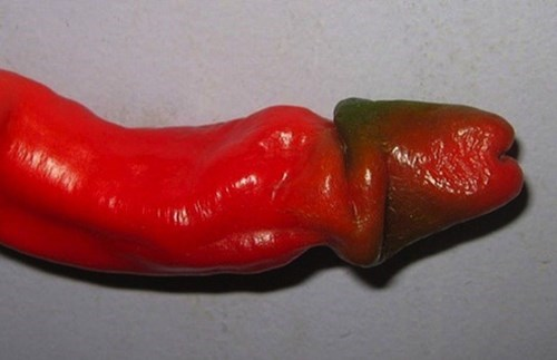 Penis Peppers All The Rage in Barcelona