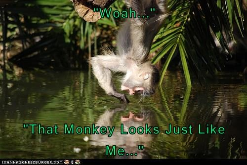 captions,monkey,funny
