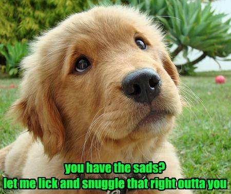 dogs captions cute - 8530766592
