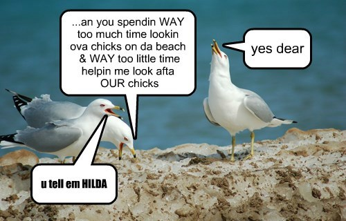 ...an you spendin WAY too much time lookin ova chicks on da beach & WAY too little time helpin me look afta OUR chicks yes dear u tell em HILDA