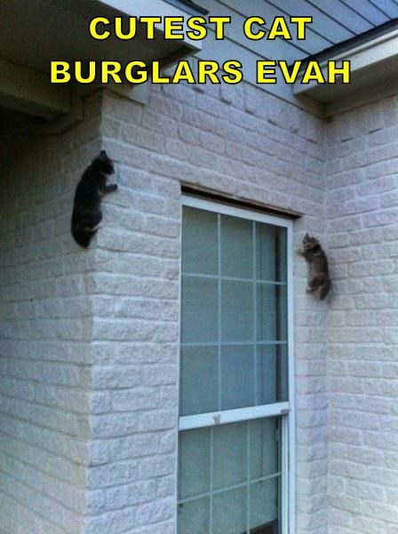 animals caption cutest cat burglars - 8531361280