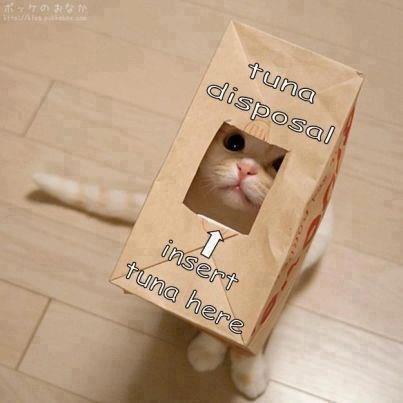 cute cats image How Convenient