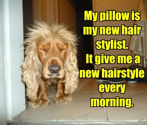 dogs captions funny - 8531497472
