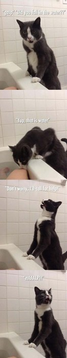 funny cats image Step 1. Assess the Situation. Step 2. HALP!