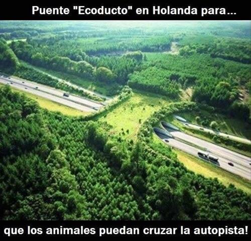 animales cruzan puente