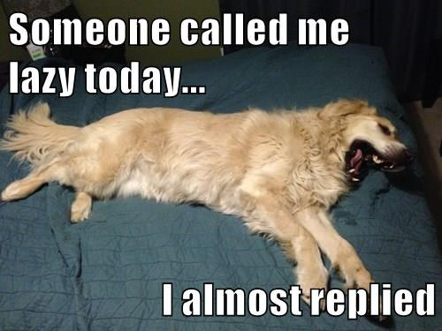 animals dogs captions funny - 8531705344