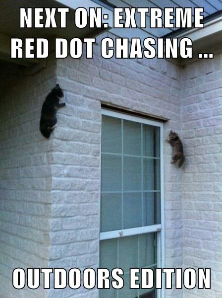 animals red dot Cats funny - 8532424448