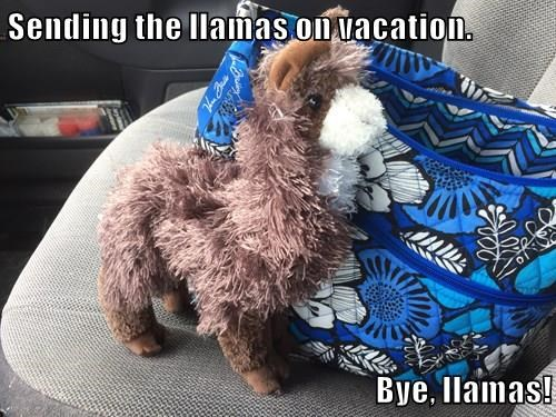 Sending the llamas on vacation.   Bye, llamas!