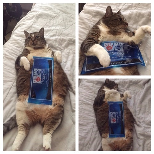 funny cats image Too Hot