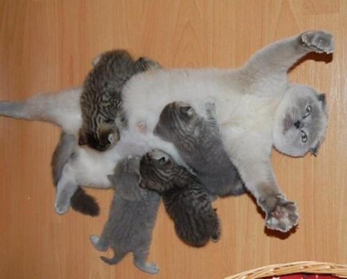 funny cats image Yay....Motherhood