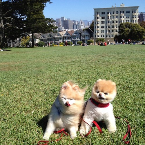 cute dogs image Looks Like the Wind is Picking Up a Bit...