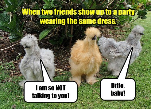 chicken,birds,captions,funny