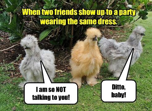 chicken birds captions funny - 8532779776