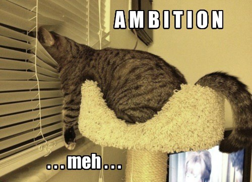 lazy Cats funny captions - 8533411840