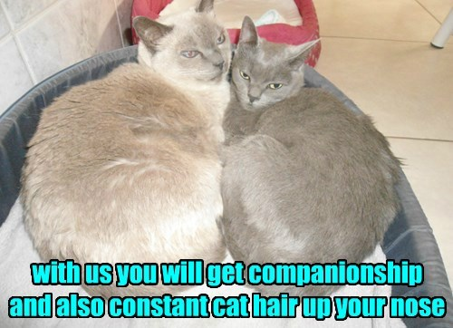 caption Cats funny captions - 8533483008