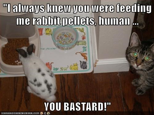 animals food funny rabbits - 8533513472