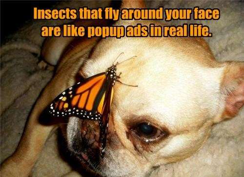 insects dogs butterfly ads captions