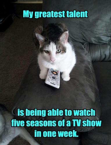 TV talent Cats funny captions - 8534156032