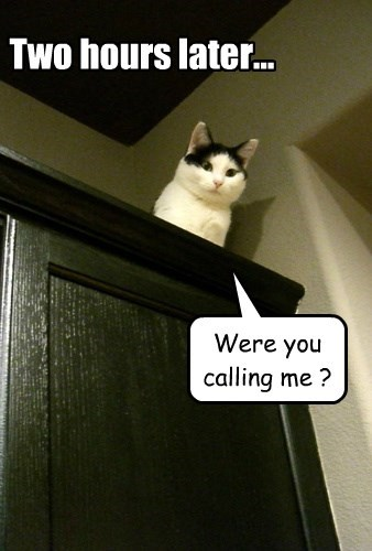 captions Cats funny - 8534423296