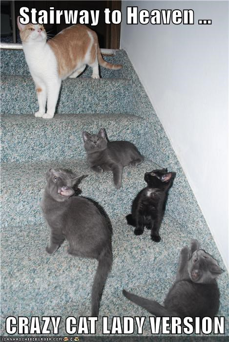 animals stairway to heaven caption Cats - 8535540480