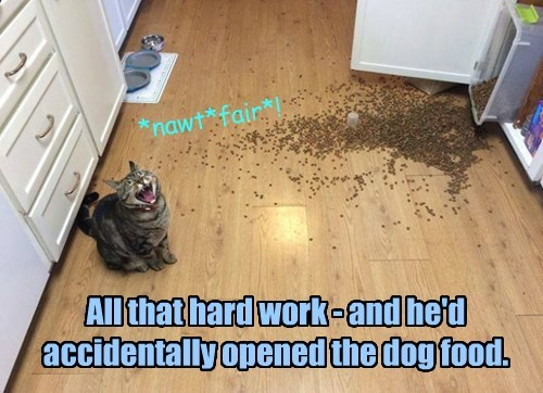 cat dog food caption