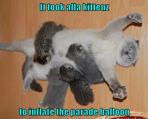 It took alla kittenz  to inflate the parade balloon