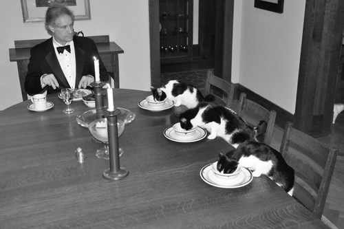 funny cats image At Least They Dressed Up for Dinner