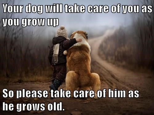 animals when I grow up captions dogs Cats - 8536062720