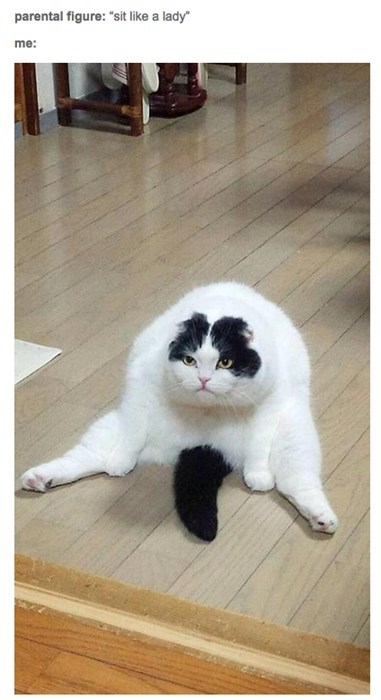 funny cats image I Am Graceful and Poised