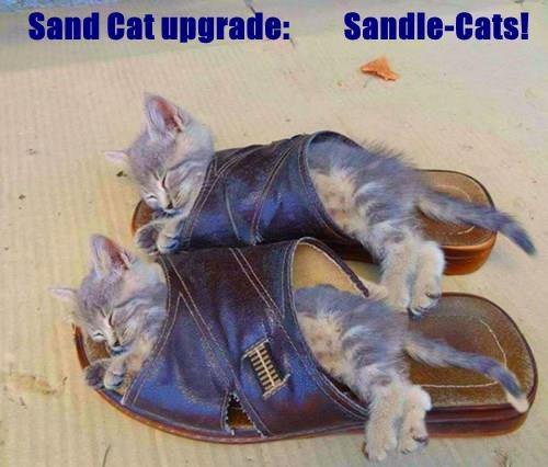 Sand Cat upgrade:         Sandle-Cats!