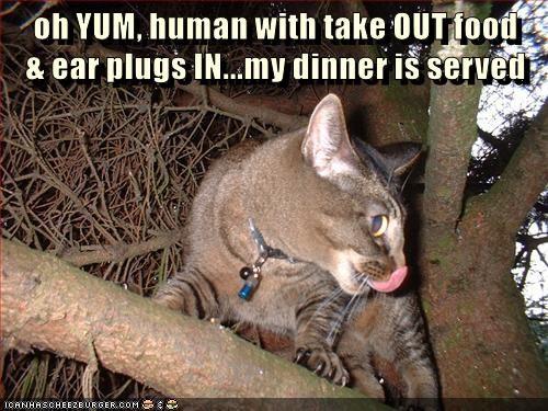 animals captions Cats funny - 8537032192