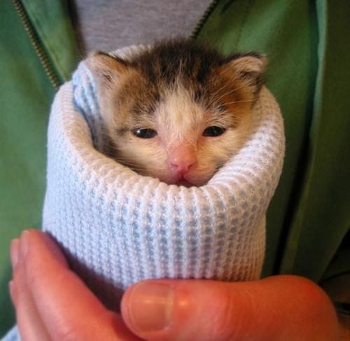 """cute cats image The """"Classic"""" Purrrito"""
