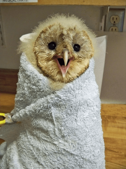 cute owls image This Sharp Looking Burrito is Happy to See You!