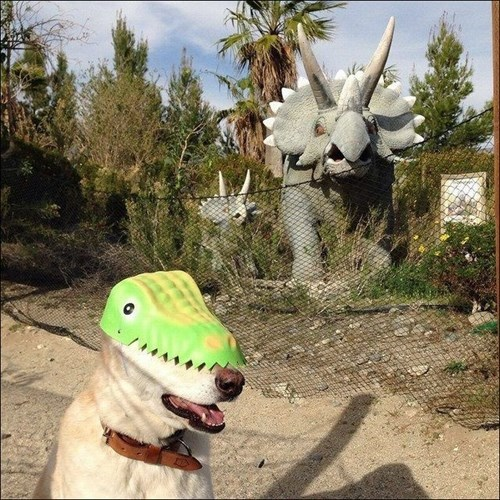 funny dogs image An Ancient Predator is Spotted in the Wild
