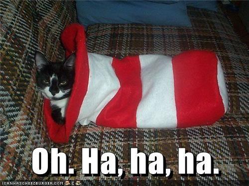 animals captions Cats funny - 8538012160
