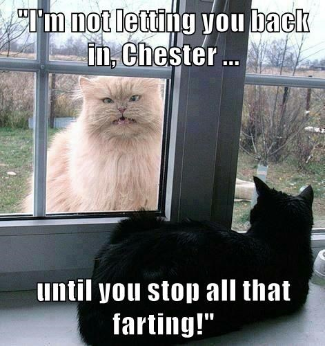 """I'm not letting you back in, Chester ...  until you stop all that farting!"""