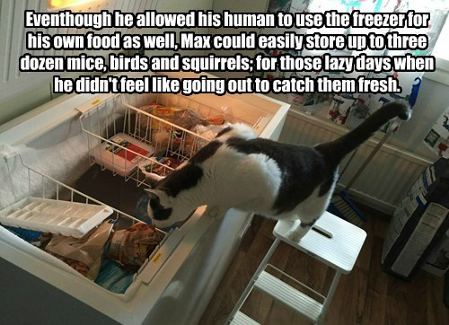 Eventhough he allowed his human to use the freezer for his own food as well, Max could easily store up to three dozen mice, birds and squirrels; for those lazy days when he didn't feel like going out to catch them fresh.