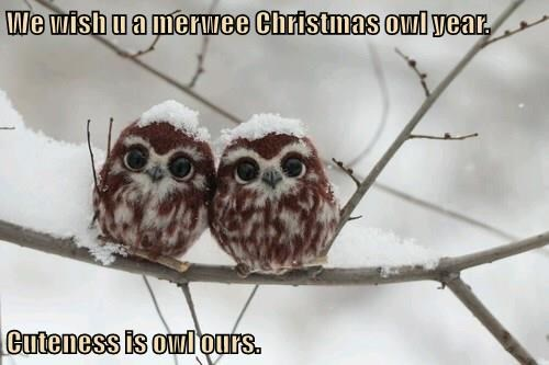We wish u a merwee Christmas owl year.  Cuteness is owl ours.