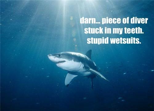 diver shark funny - 8538123520