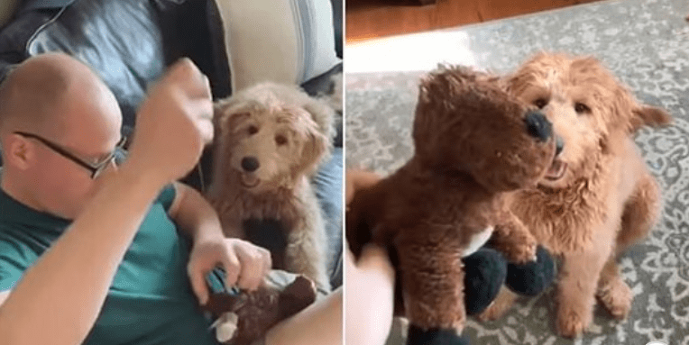Dog looking at his stuffed dog