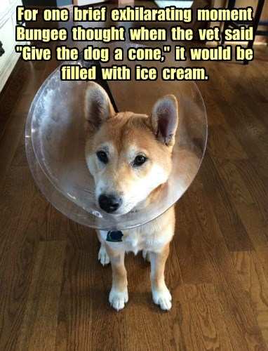 dogs captions funny - 8538717696