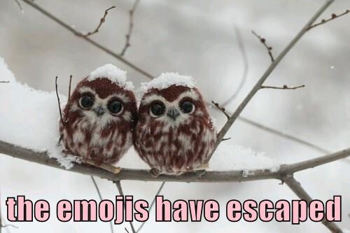 emoji,owls,funny,animals