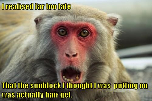 animals captions monkey funny - 8538779904
