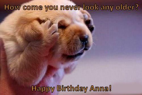 Funny Happy Birthday Golden Retriever 37614 Loadtve