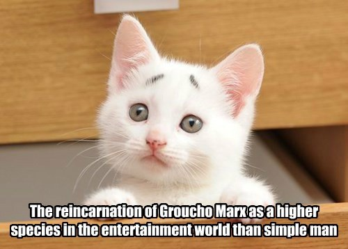 Groucho Kitty