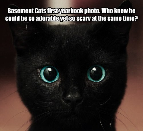 Basement Cats first yearbook photo. Who knew he could be so adorable yet so scary at the same time?