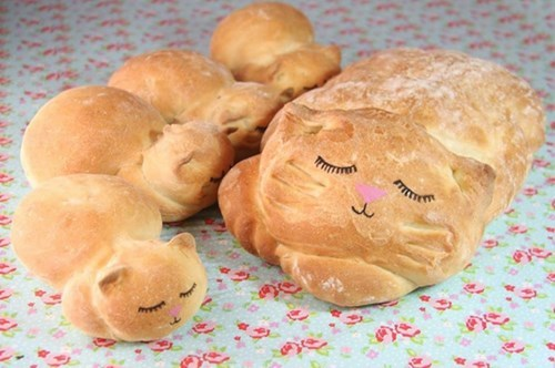 cute cats image Cat Loaf in the Most Literal Form