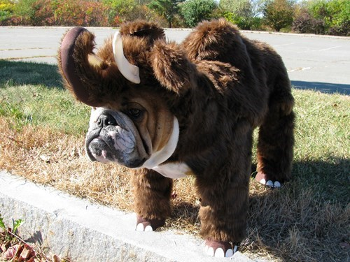 funny dogs image This Costume Deserves to Be Extinct