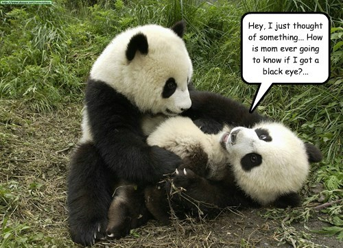 panda captions funny - 8539709184