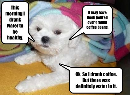 drink,dogs,water,coffee,captions